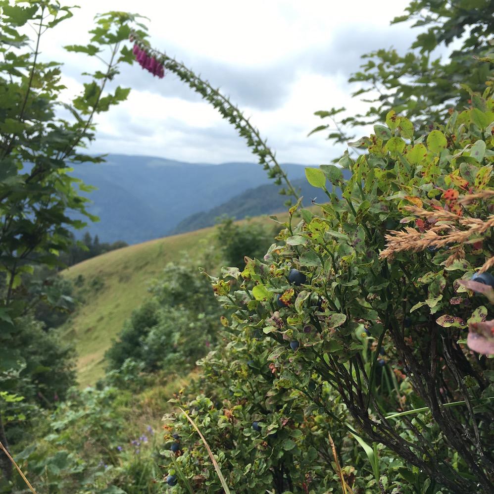 Alsace Vosges Mittlach